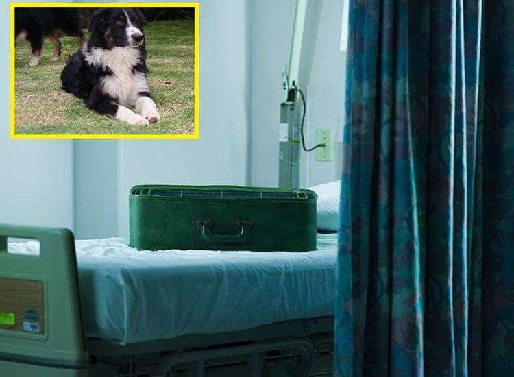 hombre-mete-perro-maleta-entrar-hospital