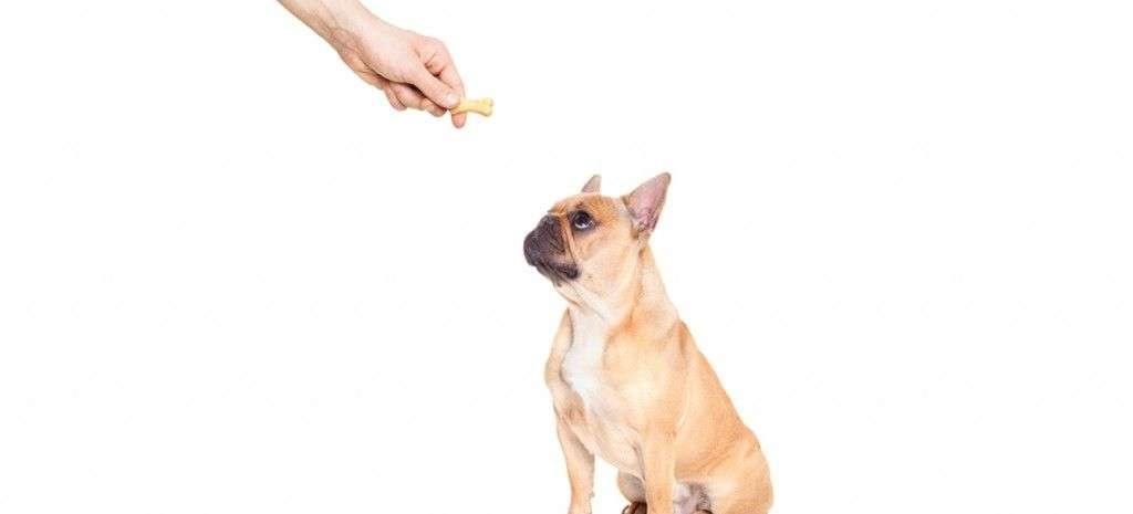 premios-para-perro-caseros