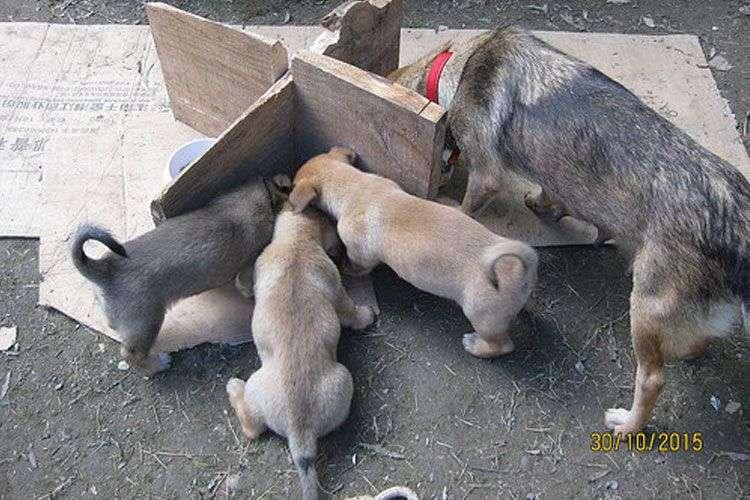 madre-y-cachorros-enterrados-vivos