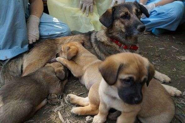 perra-y-seis-cachorros-enterrados-vivos
