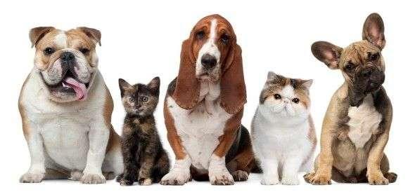 Perros Que Orinan En La Cama Ev Talo Articulos De Perros