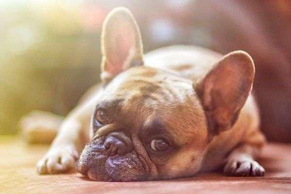 Cómo Elegir Veterinario para Tu Perro