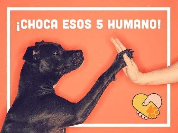 Amistad entre perro y humano
