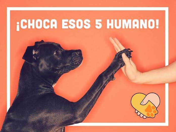 Amistad Perro Humano