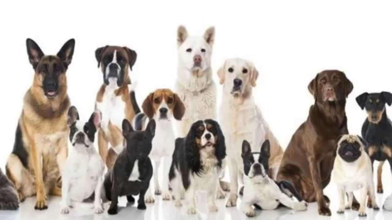 Pienso para Perros Segun Edades