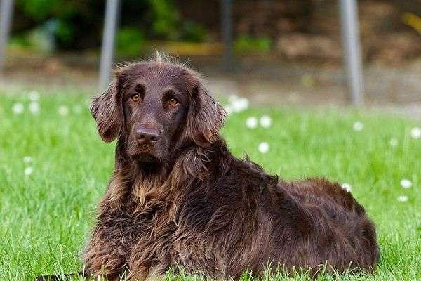 Consejos para Evitar Que tu Perro Se Pierda