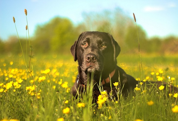 Consejos para Viajar con Tu Perro por Europa