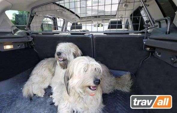 ¿Cómo viajar con tu perro en coche?