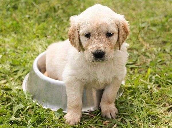 10 Consejos para Cuidar a tu Perro