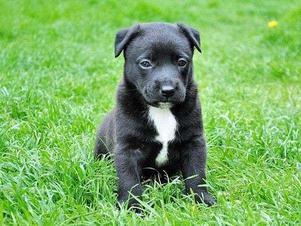 Cómo Elegir una Peluquería Canina