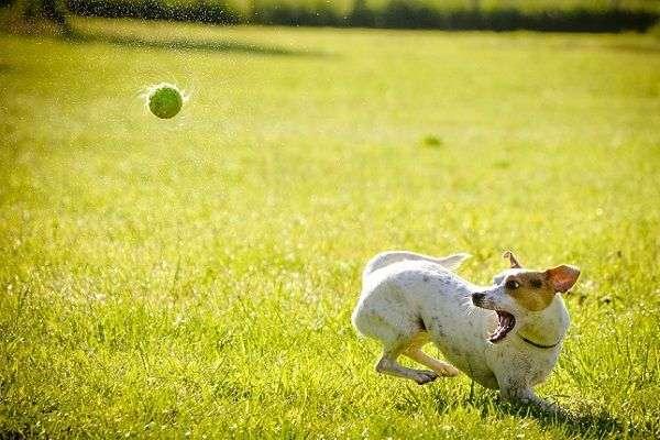 Consejos para Cuidar Bien a Tu Perro Siempre