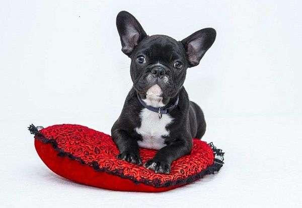 Qué es la Depresión Estacional en Perros