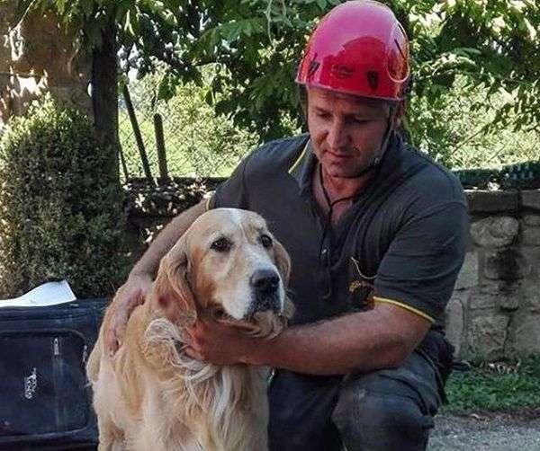 Un Perro Sobrevive Nueve Días al Terremoto de Italia