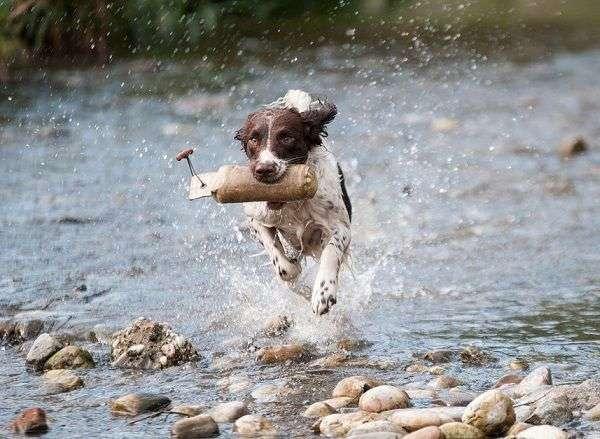 10 Reglas de Oro para Hacer Feliz a Tu Perro