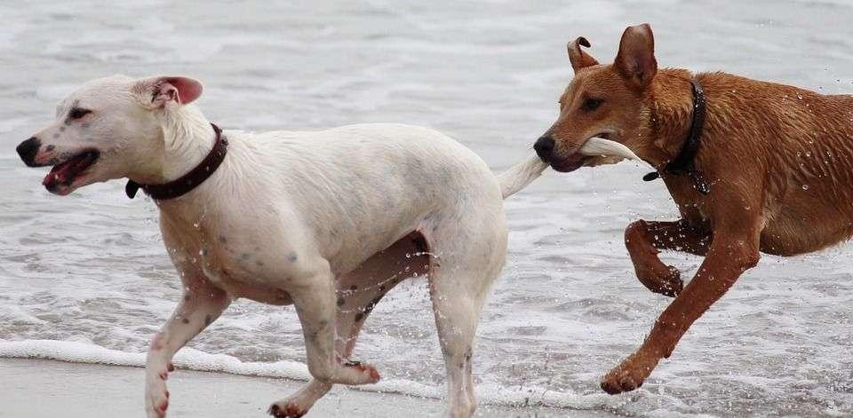 Cómo Apadrinar un Perro