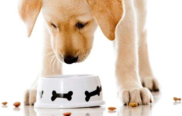 Gu a para seleccionar el mejor pienso para nuestro perro for Mejor pienso para perros