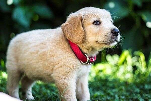Beneficios de los Perros para las Personas Mayores