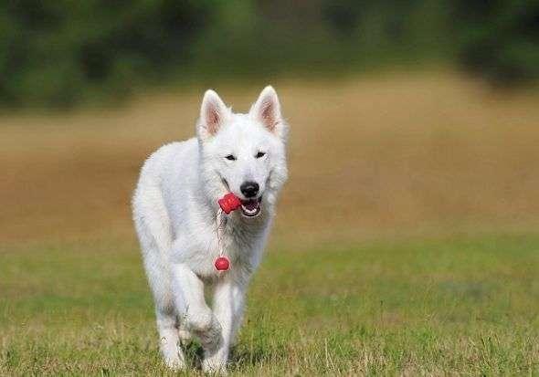 Calendario Personalizado con Fotos de tu Perro
