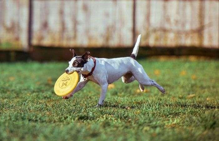 Consejos para Dueños Responsables de Perros