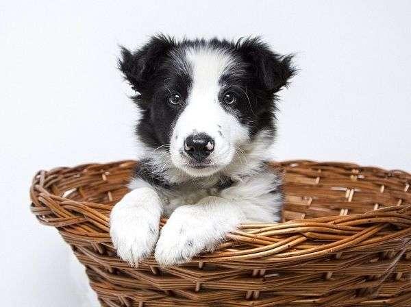 Cómo Organizar Paseos Divertidos para Perros