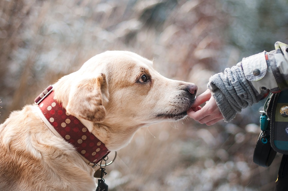 Gudog, Alternativa a una Residencia Canina