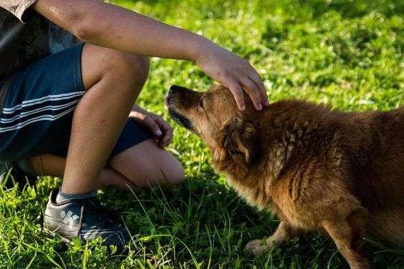¿Cuál es la Realidad del Abandono Animal?