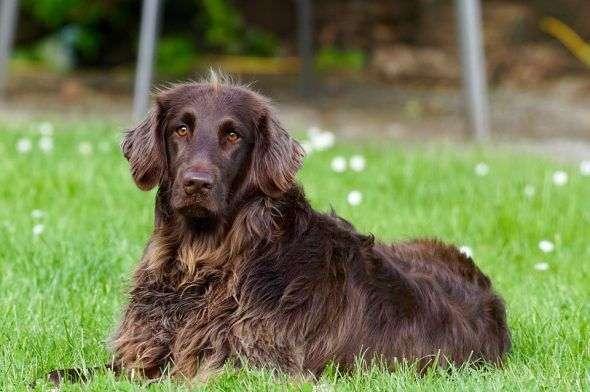 Cómo Prevenir Ansiedad por Separación en Perros