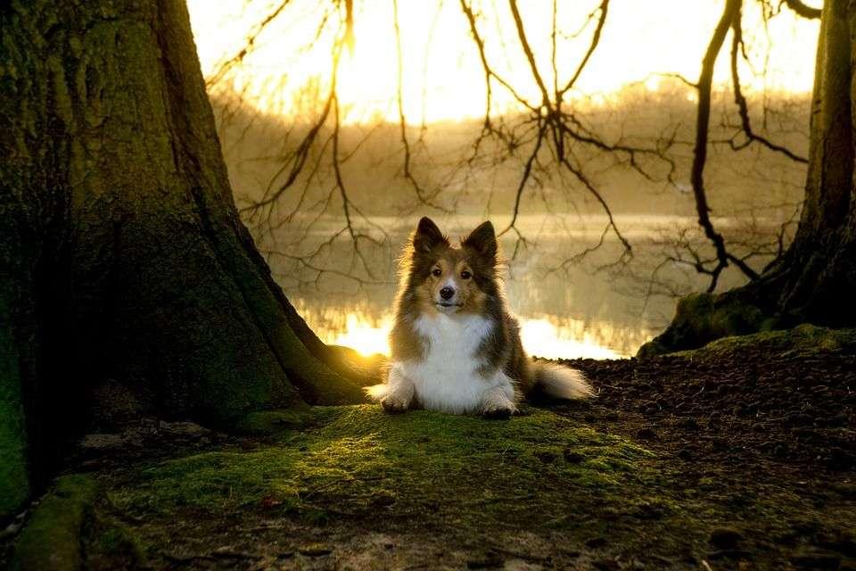 Causas de la Depresión Estacional en Perros