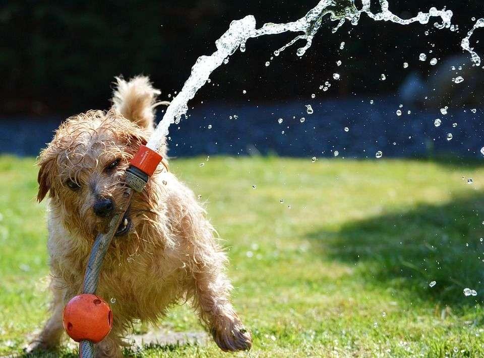Cómo Organizar una Fiesta de Cumpleaños para Tu Perro