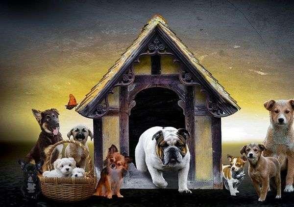 Tipos de Casetas de Perros