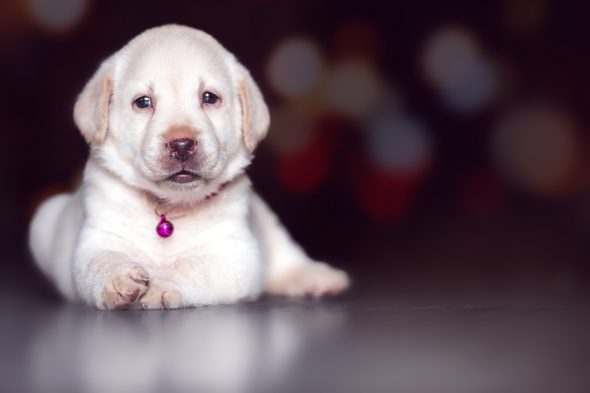 4 Buenas Razones para Adoptar un Perro en Navidad