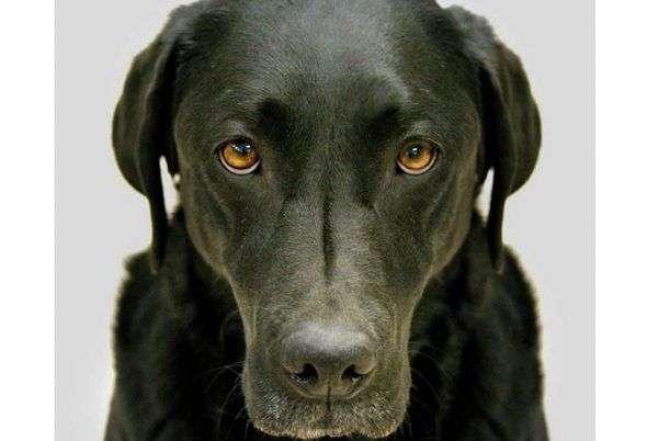Libro Recomendado: En La Mente de Un Perro