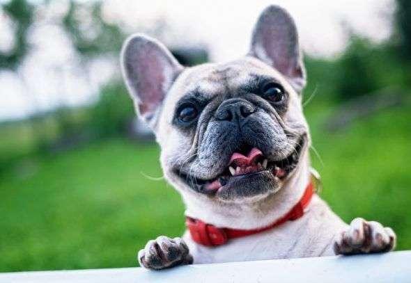 Cinco Fases del Duelo tras la Muerte de un Perro