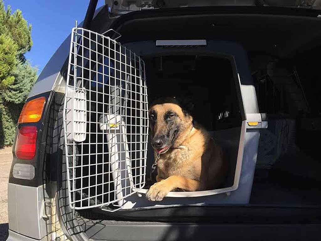 Usar transportin para perros en el coche