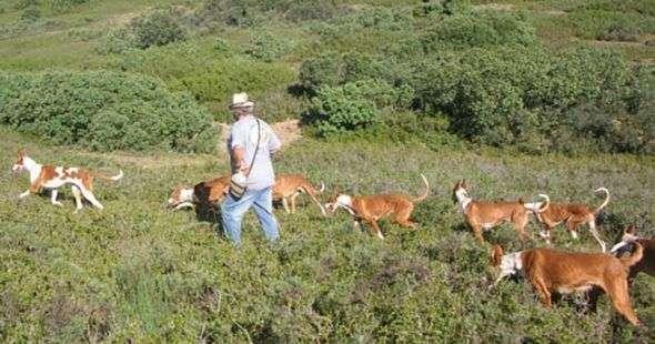 como enseñar a un perro a cazar