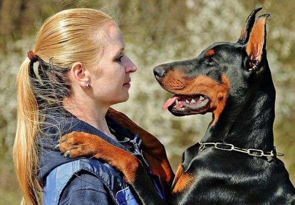 Cómo Elegir un Perro Guardián