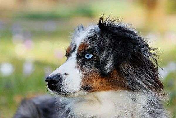 Cuatro Planes que Puedes Hacer con tu Perro