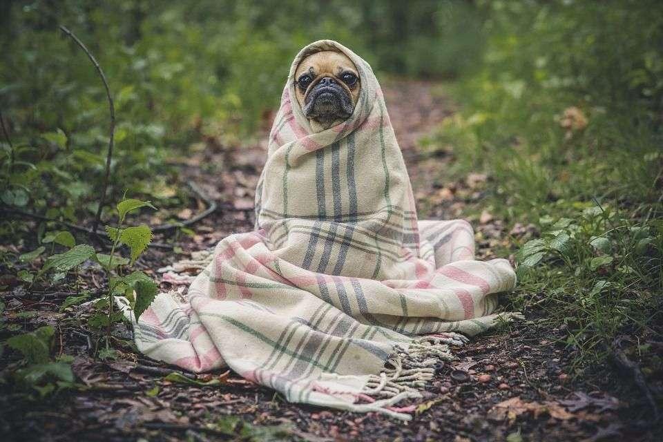 Todo lo que debes saber sobre el ACICALAMIENTO de tu perro
