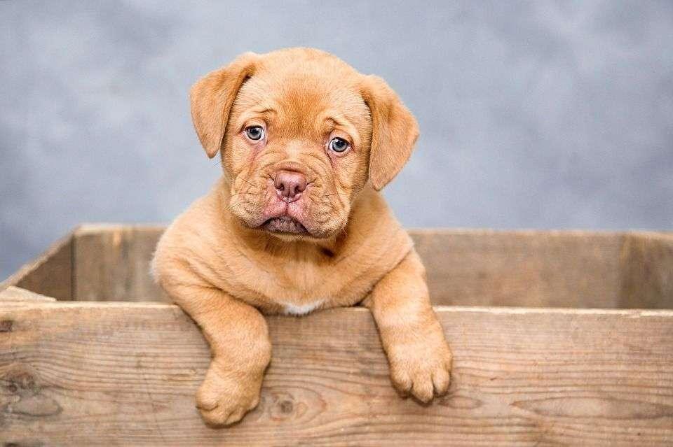 Cómo elegir el NOMBRE de un perro