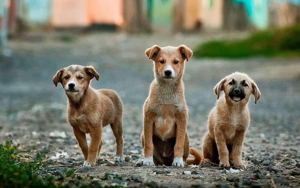 Perros que le tienen MIEDO a otros perros