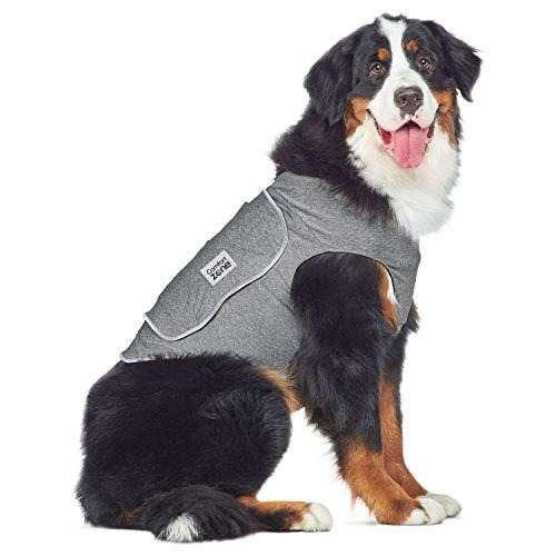 5 Para Perros Accesorios Divertidos P80wOkXn